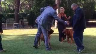 Xiii Raduno Italiano Dogue De Bordeaux 2015 - Italian Clubmatch