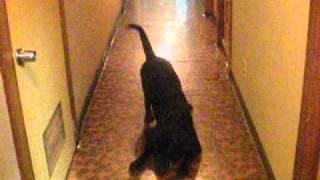 愛犬、らいむちゃん。 我が家の廊下にて。 テスト投稿です。