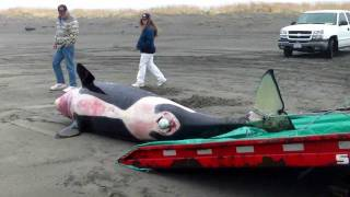 Orca   recovery