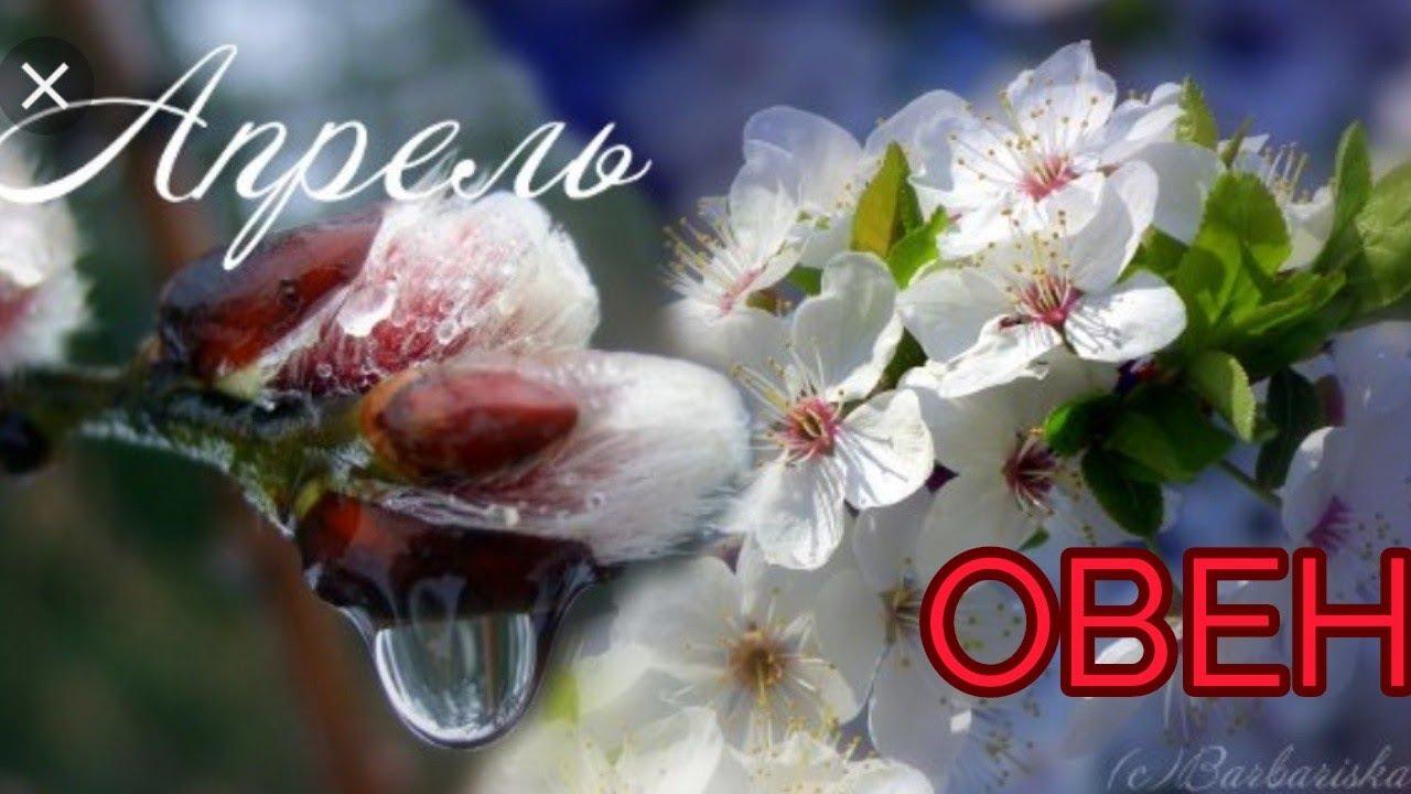 Онлайн гадание: АПРЕЛЬ 2019 ОВЕН! Таро гороскоп