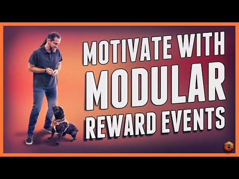 motivate-a-dog-(even-skittish)---modular-reward-events!