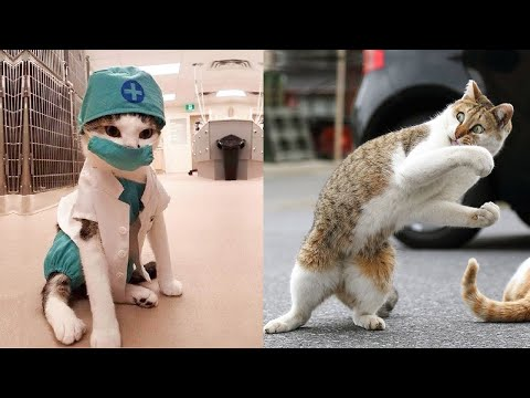 Try Not To Laugh or Grin While Watching Funny Animals Compilation #46
