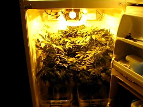 Medical Stealth Grow Fridge Deluxe Youtube