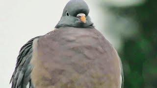 4K Garden Bird In Snow - Winter Garden - Nature Sound - Beautiful Snow - Birds Chirping and Singing