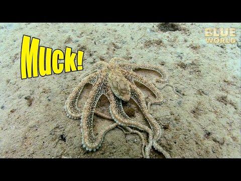 Florida Muck Diving | JONATHAN BIRD'S BLUE WORLD
