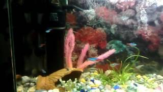 Рыбка неон аквариумистика