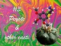 The History of Drugs #3 - Peyote & Other Psychedelic Cacti
