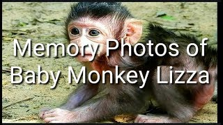 Memory Photos of Baby Monkey Lizza!! It's Touching Heart To See Those Photos, Baby Monkey Lizza