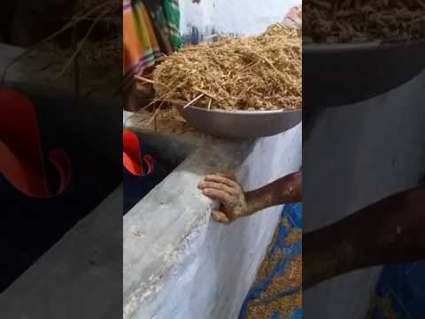 Fermented Corn by Green Farm Rony at Aamra Dairy Farmers