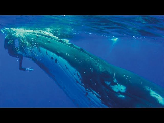 Wal schiebt Frau durch das Wasser - Als sie den Grund erkennt, ist sie zu Tränen gerührt!