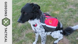 Mountainsmith K9 Dog Pack Review: New Model (2015)