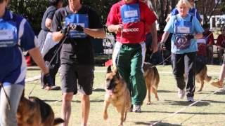 Introduction To Gsd Federation Of Sa (bloemfontein) Club