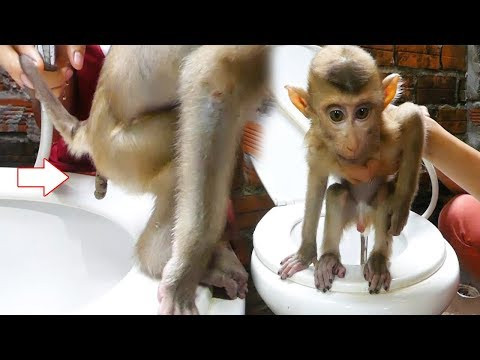Dodo Learn How To Use Toilet And Bath Routine Early Morning