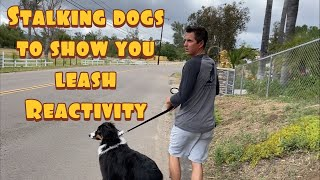 Training a dog to not be reactive on leash