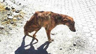 Encontró este pobre perro en la calle y lo adoptó, mira lo que pasó luego thumbnail