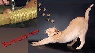 Убитая временем когтеточка  ▌когтеточка для котов своими руками ✂ приучить котенка точить когти ...