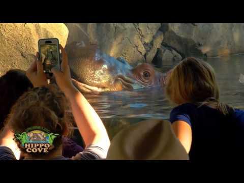 Hippo Cove Grand Opening - Cincinnati Zoo