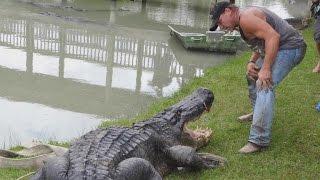 Reptile Handler Captures The Biggest Alligator You've Ever Seen