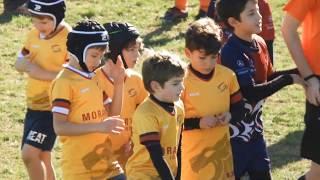 XV Rugby Murcia - Sub 8