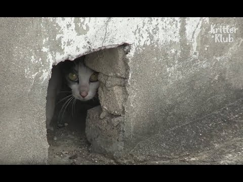 Cat Hiding In A Roof Has A Secret.. | Kritter Klub