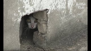 Cat Hiding In A Roof Has A Secret.. | Kritter Klub