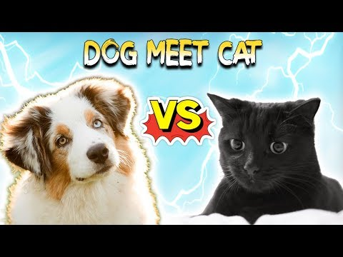 🐶Funny Animals Compilation 2019 : Dog vs Cat