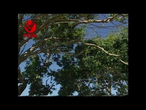 Kahit Na as popularized by Zsa Zsa Padilla Video Karaoke