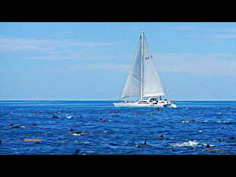 Sailing with Dolphin Superpod Costa Cetacea Media