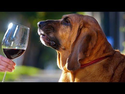 Алкоголики и наркоманы животного мира