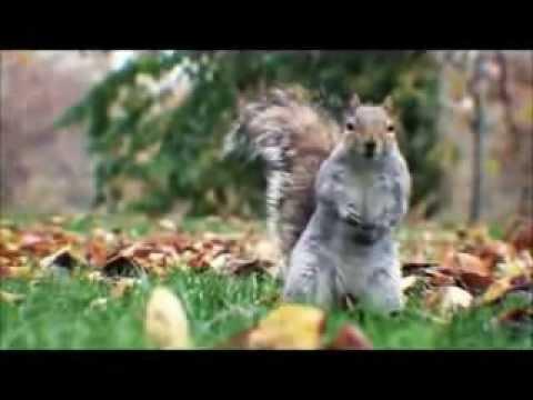 SQUIRRELS dancing GANGNAM STYLE