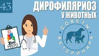 Дирофиляриоз у животных | Что такое дирофиляриоз | Симптомы дирофиляриоз | Советы Ветеринара