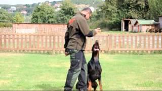 Kıvanç Tatlıtuğ 'un doberman cinsi köpeği Pars ileri itaat eğitiminde