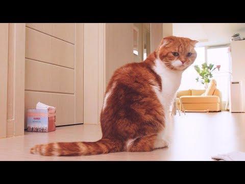 배가 고프면 티슈를 뜯는 고양이