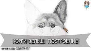 Как нарисовать собаку породы Корги Вельш карандашом. Построение (07.03.2019)