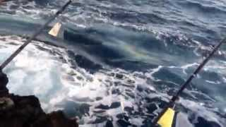 ulua omilu june 2015 ulua fishing big island