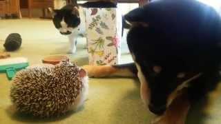 犬と猫とハリネズミ(2015年5月)