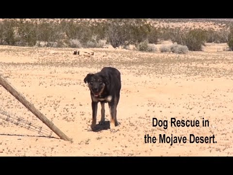 Thumbnail: Epic Mojave Desert Dog Rescue Mission - A MUST SEE. Please Share.