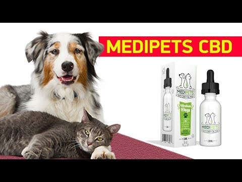 can-i-give-my-dog-human-cbd-oil---medipets-review!