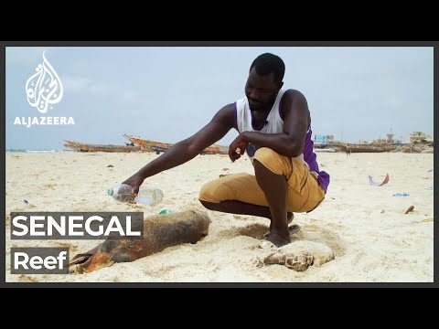 Illegal fishing techniques in Senegal threatens reef