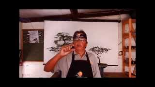 . Como fazer bonsai desde semente. Bonsai Shizen(Ladoso)