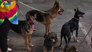 У Полтаві шукають господарів для п'ятьох собак