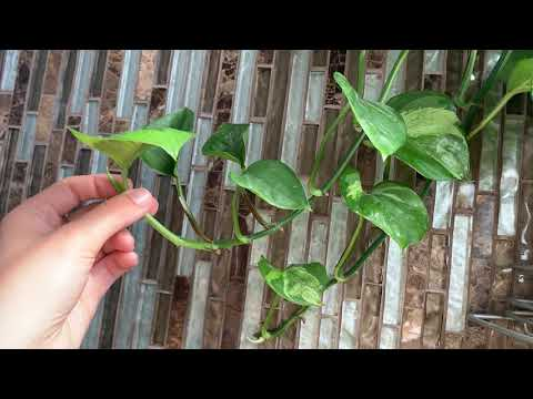 Houseplant Series: Propagating Plants with Kids