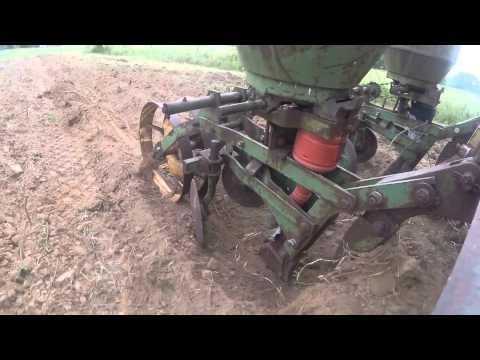 Planting M81E sweet sorghum