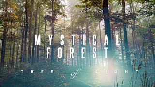 Mystical Forest 🌳 Magical Elven Voice   Rainstick & Tibetan Bowls Meditation Music