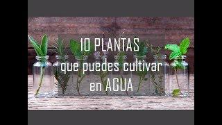 10 PLANTAS que puedes cultivar en AGUA🌱
