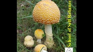 Survival Tip: Wild Mushrooms