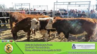 14-08-19 - Venta de Hacienda para Faena - Campos y Ganados S.A. - Claraz