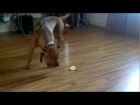 Прикольные собаки Самые смешные собаки В МИРЕ!!!! Смотри