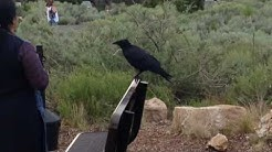 Grand Canyon bird dump