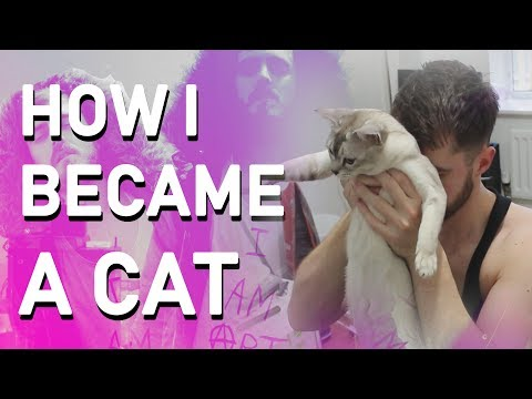 How I Became a CAT 😺😸😹😻😼 (Documentary)